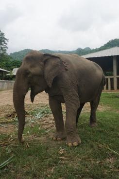 Smiling elephant :)