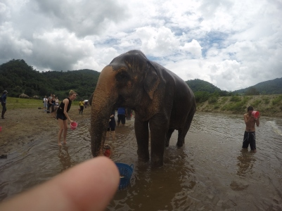 Hey look..an elephant!